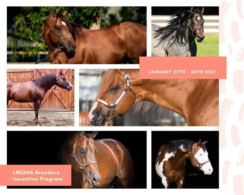 LMQHA Stallion Auction